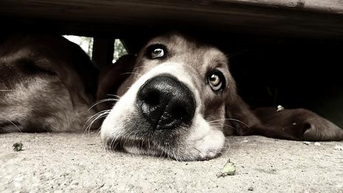 namoro cão
